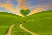 Green Heart-shaped Tree On A S...