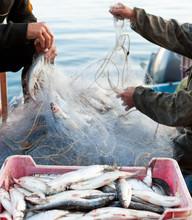 Fishers Work