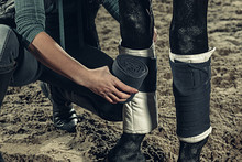 Bandaging Horses' Legs With A ...