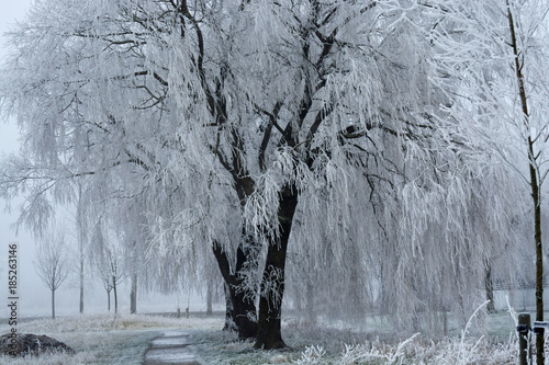 Landscape In The Winter With Weeping Willow Tree Snow