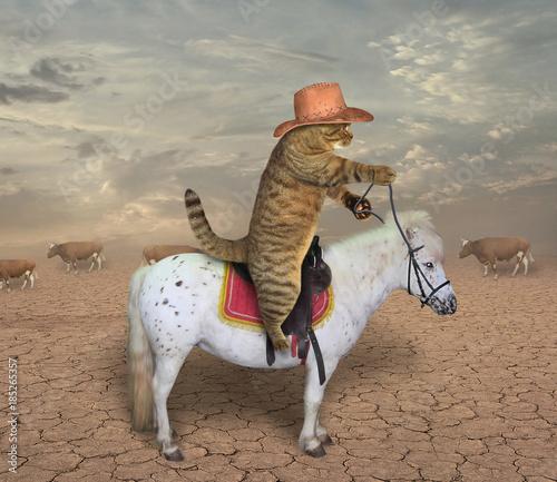 Fotografie, Obraz  The cat cowboy riding a horse grazes cows.