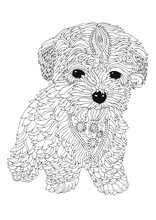 Bichon Frise Puppy. Hand Drawn...
