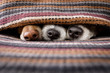 canvas print picture - dogs under blanket together