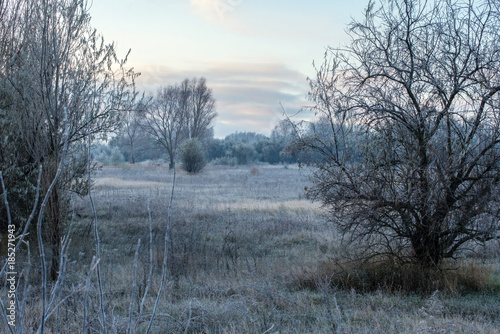winter landscape with frost in the early morning rural with trees © Line