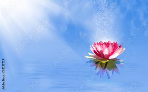 Garden Poster Lotus flower magic lotus flower on the water
