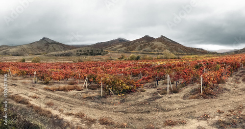 Spoed Foto op Canvas Cappuccino Vineyard in the Crimean mountains