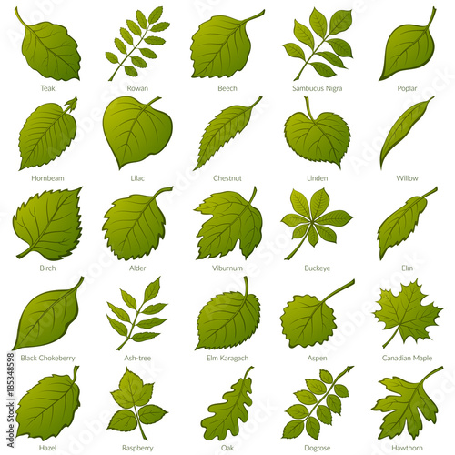 Set of Green Leaves of Various Plants, Trees and Shrubs, Nature Icons for Your Design Canvas Print