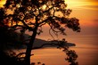 pine on the coast of the sea at sunset