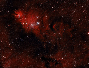 Christmas Tree Nebula or NGC2264.