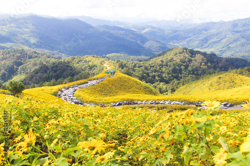 Foto op Canvas Oranje Landscape of beautiful Mexican sunflower in Tung Bua Tong in Maehongson (Mae Hong Son) Province, Thailand.