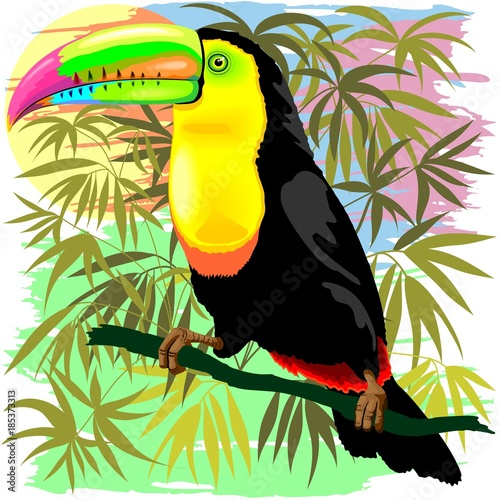 Deurstickers Draw Toucan Wild Bird from Amazon Rainforest