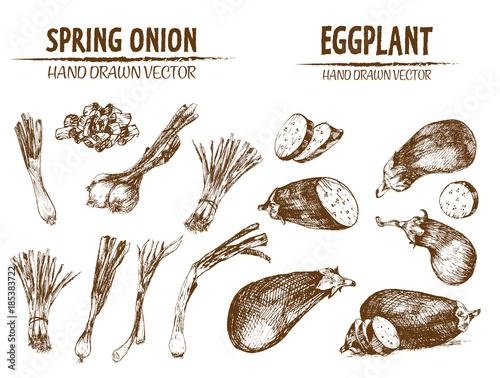 Fototapeta Digital vector detailed line art spring onion obraz