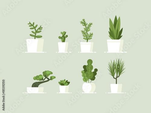 Houseplant in pots Canvas-taulu