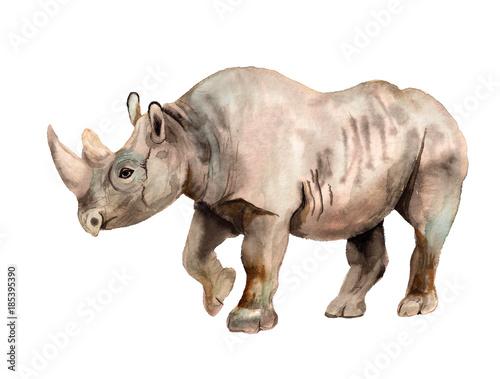 Fototapeta premium Akwarela obraz nosorożca