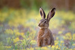 European hare stands in the grass and looking at the camera