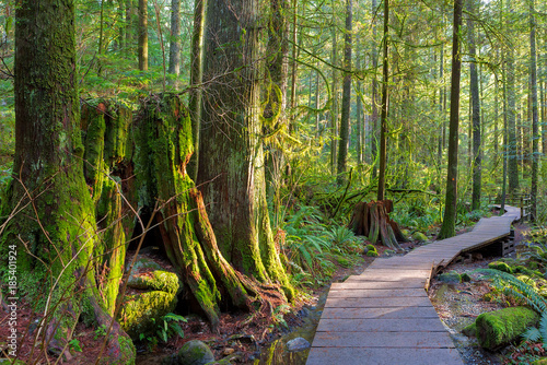 Photo Stands Forest Hiking Trail Through Forest in Lynn Canyon Park Vancouver BC Canada