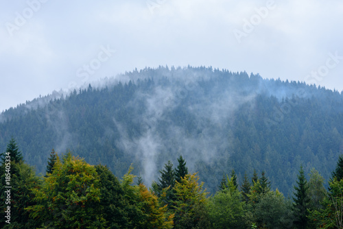 Garden Poster Forest misty morning view in wet mountain area in slovakian tatra