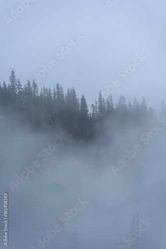 Fotobehang Bossen misty morning view in wet mountain area in slovakian tatra. autumn colored forests