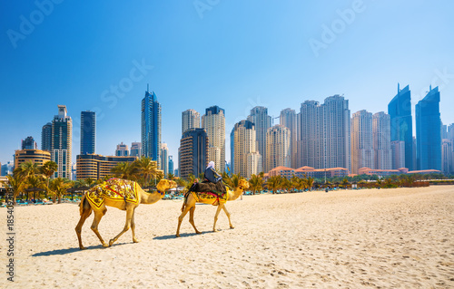 Photo  The camels on Jumeirah beach and skyscrapers in the backround in Dubai,Dubai,Un