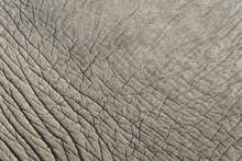 Close Up Of Elephant Skin As A...