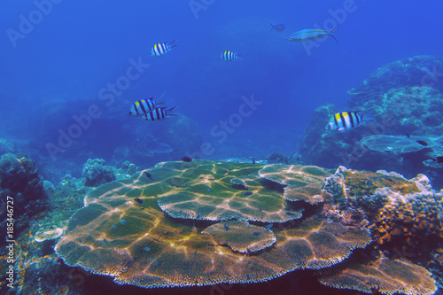 Staande foto Koraalriffen The sunlit coral reef in lagoon of South China sea near Redang island, Malaysia
