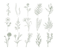 Set Of Detailed Botanical Draw...