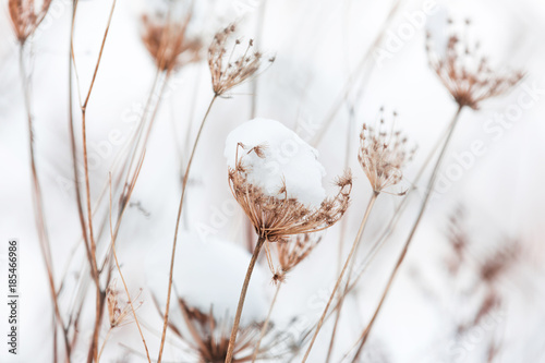 Fotografía  Grass flower with snowball white nature background