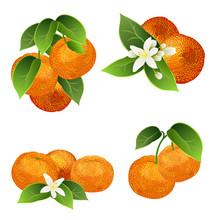 Mandarin Fruits (Citrus Reticu...