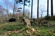 Leinwanddruck Bild - Schwarzwild, Frischlinge mit Weitwinkel fotografiert, April