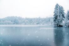 Frozen Lake In Snowy Forest.