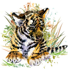 Tiger Cub. Forest Animals Wate...