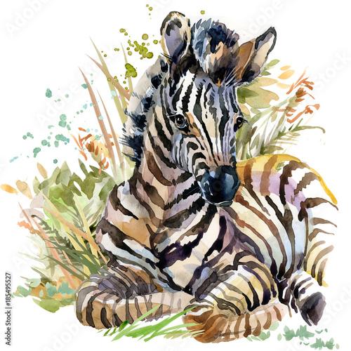 zebra-dzikie-zwierzeta-akwarela-pokaz