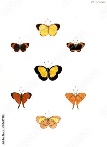 Deurstickers Vlinder Butterflies