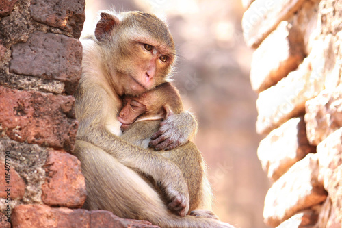 Foto op Aluminium Aap Mother Monkey Hug Baby