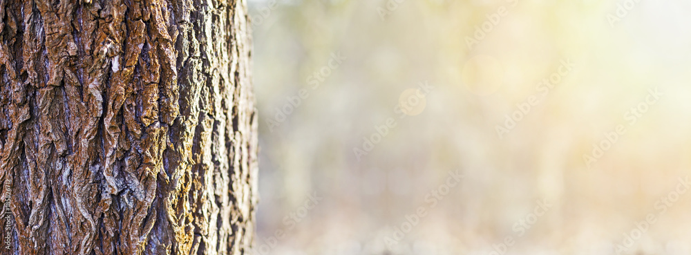 Fototapety, obrazy: Tree trunk close-up in the forest - web banner with copy space