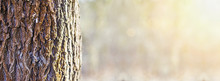 Tree Trunk Close-up In The Forest - Web Banner With Copy Space