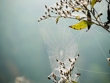 Spider Web In Morning Due With A Blurred Background