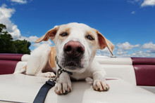 Dog In A Boat Enjoying The Ride