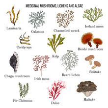 Medicinal Mushrooms, Lichens A...