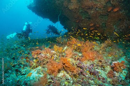 Fototapeta kolorowy miękki koral i szkoła ryb na rafie w oceanie, Malediwy