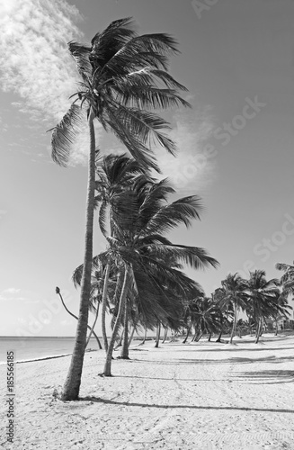 Black and white caribbean beach with palm trees