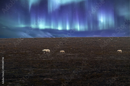 Polar bear mother and baby in Svalbard on northern lights background