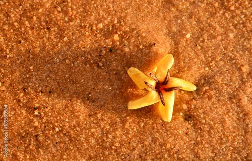 Fotografie, Obraz  florzinha em alter-do-chão, pará