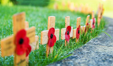 Remembrance Poppies On Wooden Crosses On Green Grass With Low Depth Of Field
