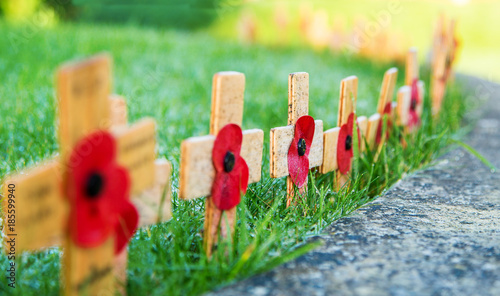 Remembrance Poppies on wooden crosses on green grass with low depth of field Wallpaper Mural