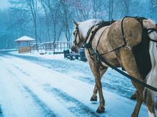 Horses With Carriage In Walk In The Winter Snowy Forest
