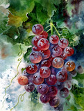 Colorful grapes. Bunch of grapes. Beautiful watercolor illustration. Drawing of grapes on paper. - 185626358