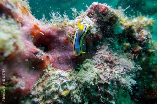 Foto op Aluminium Onder water Colorful sea animals Nudibranch