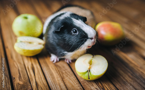Fotografía  Guinea Pig wants to try juicy fruit