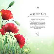 Vector Card. Poppies And Grass...
